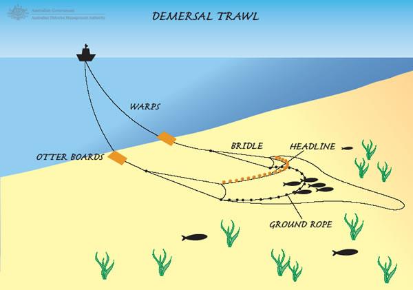 demersal_trawl