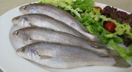 Image result for cá đỏ dạ