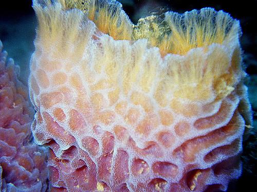 real ocean sponges - 500×375