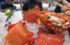 spanner_crab_cua-huynh-de-1