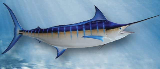 blue-marlin-large