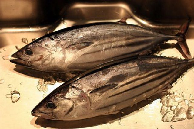 katsuo-sushi-fish