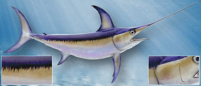 swordfish-large
