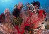 bright-red-coral-covered-with-crinoids-on-a-reef-at-bali-indonesia