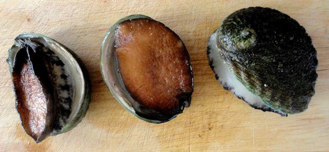 abalone_1