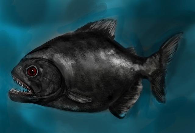 Black-paranha1