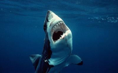 shark-attack-stories-2