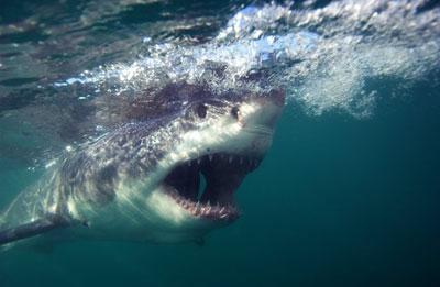 shark-attack-stories-three