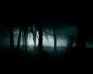 creepy_woods_night