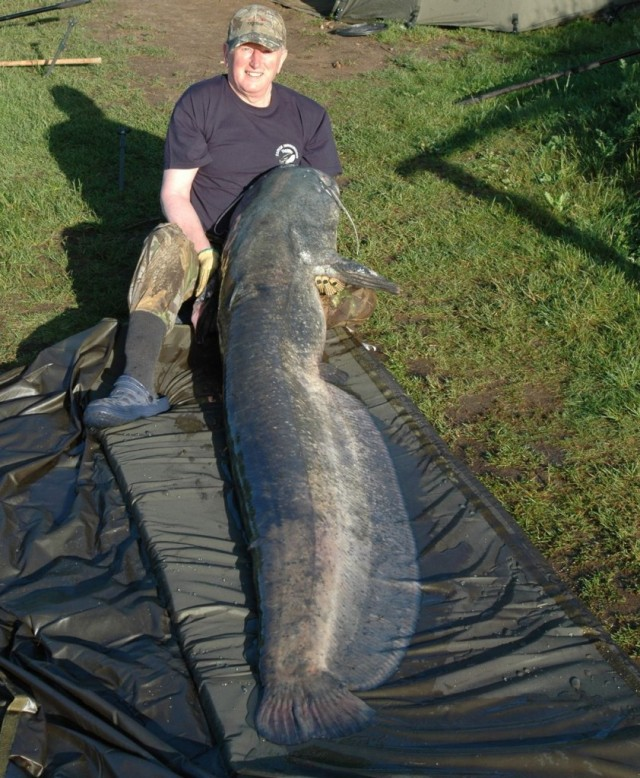 wels-catfish-2