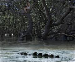 black water croc