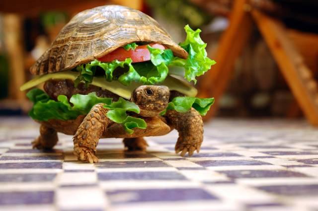 Burger-Rua