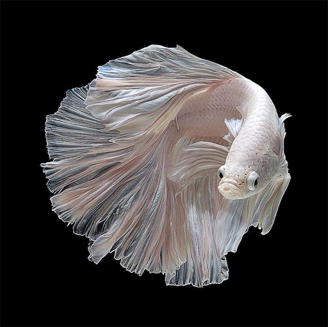 Visarute_Angkatavanich_fish5_wblog