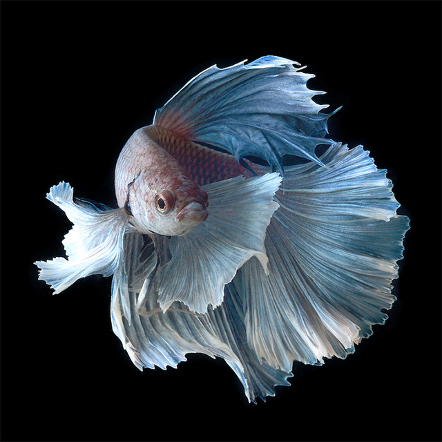 Visarute_Angkatavanich_fish_wblog