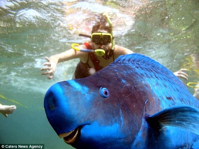 Parrotfish-1