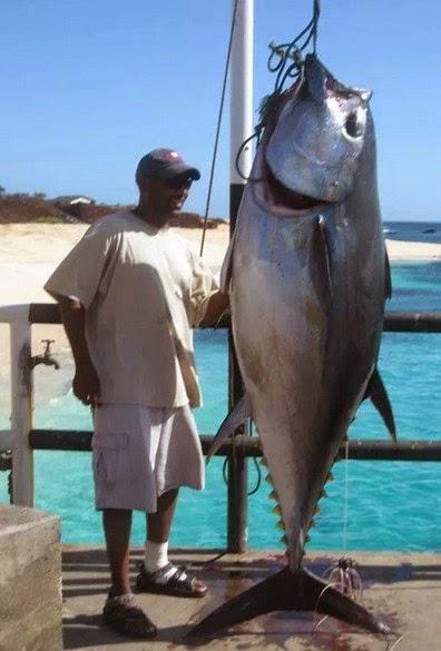 Big-eye-Tuna-7