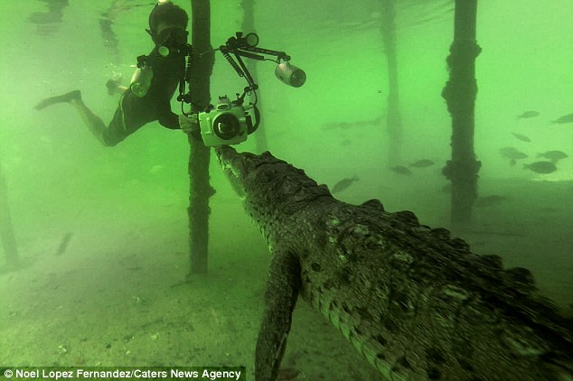 Cá sấu 4