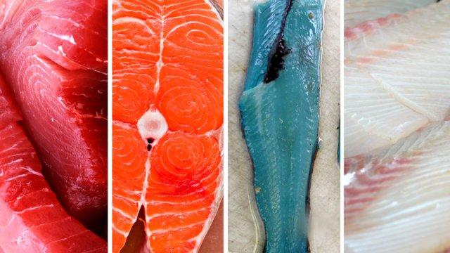 fish-promo