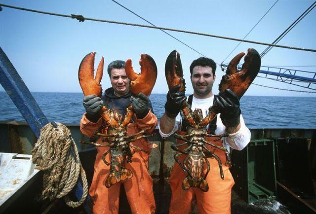 Lobster 8