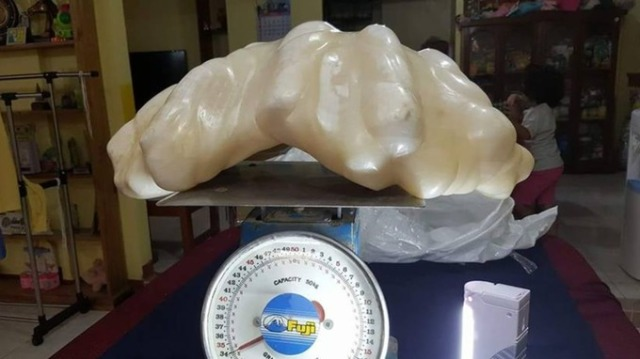 worlds-biggest-pearl-giant-clam