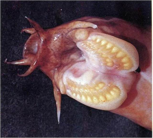hagfishmouth
